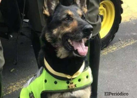 Sombra es una perra policía de 6 años de edad, de raza Pastor Alemán y ha pertenecido al departamento antinarcóticos prácticamente toda su vida.
