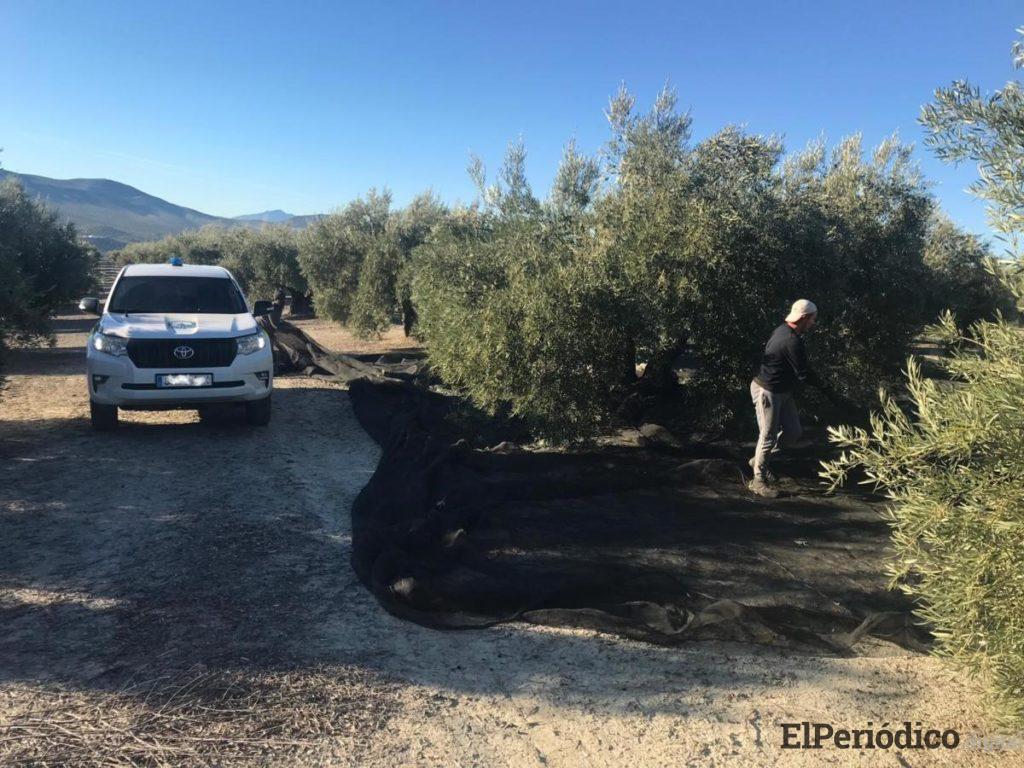 La Policía de la Junta se suma a la lucha contra el hurto de aceituna incautando hasta el momento más de 1.600 kilos 1