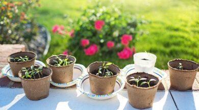 seedlings-2708679_960_720