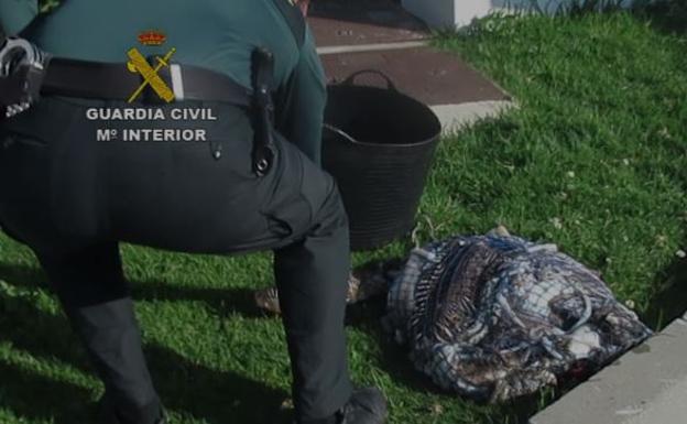 Sucesos | Denunciado un submarinista en Marbella tras pescar 15 kilos de jibia durante el confinamiento