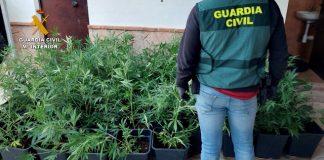 alijo marihuana confiscado en la operación ZUREK | Foto Guardía Civil
