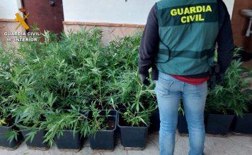 alijo marihuana confiscado en la operación ZUREK   Foto Guardía Civil